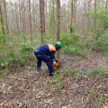Las licença ambiental simplificada