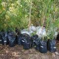 Rima licenciamento ambiental
