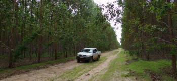 Empresa de inventário florestal