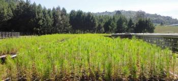 Lac licenciamento ambiental
